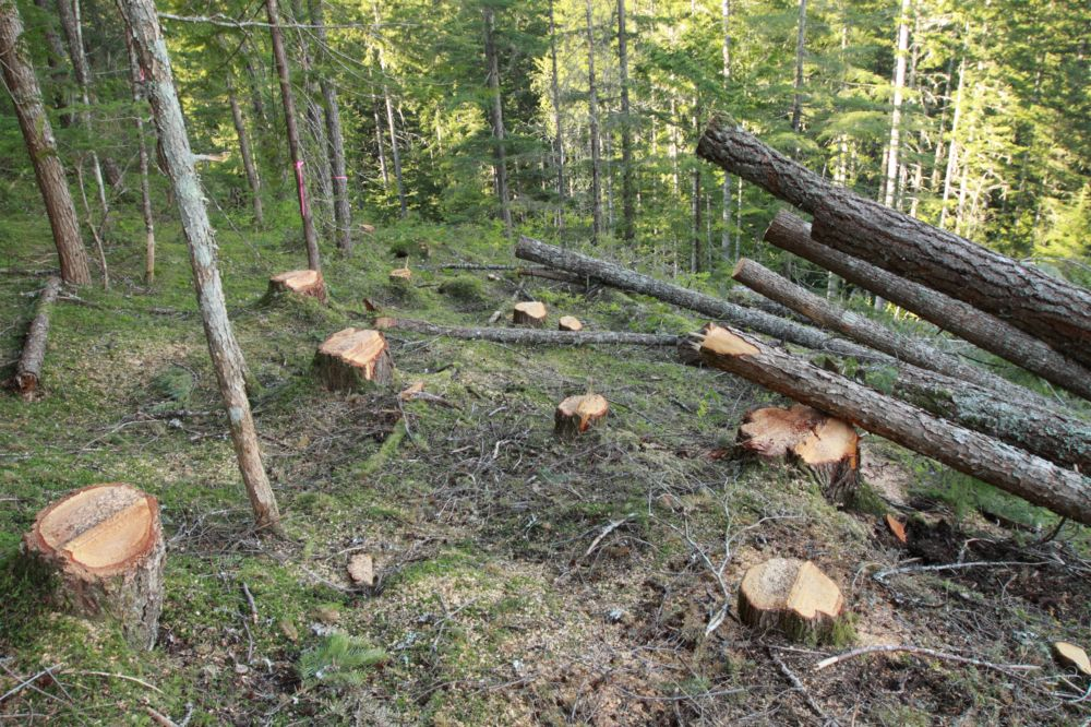 4 Tips To Help You Decide Whether Cut Down A Tree Or Not