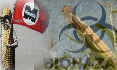 GMO,Monsonto,