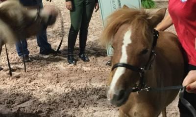 Mini Horse Heros