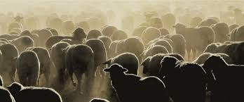 Tal Yarden, Counting Sheep