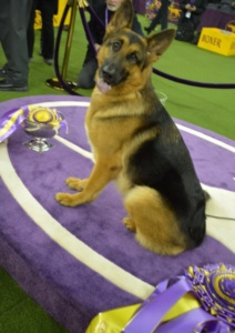 Westminster Dog Show, Rumor