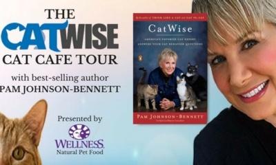 The CatWise Cat Café Tour