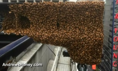 Honey bees,Times Square