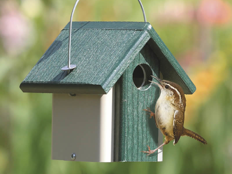 4 Top Tips For Selecting A Good Birdhouse Times Square