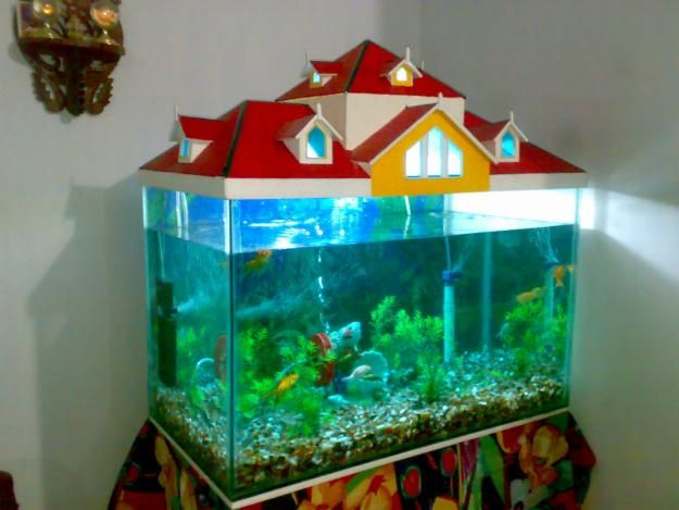 Fish Aquarium Top Cover Designs 1000 Aquarium Ideas