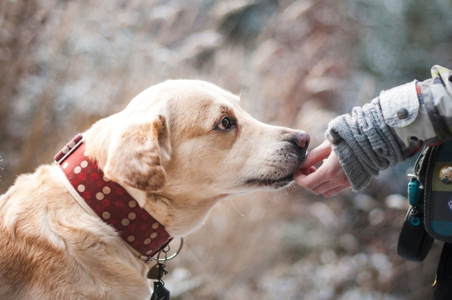 Top 7 Therapy Dog Breeds | Times Square Chronicles