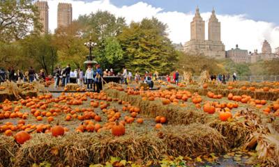 Pumpkin Patch in Central park