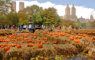 Pumpkin Patch in Central park