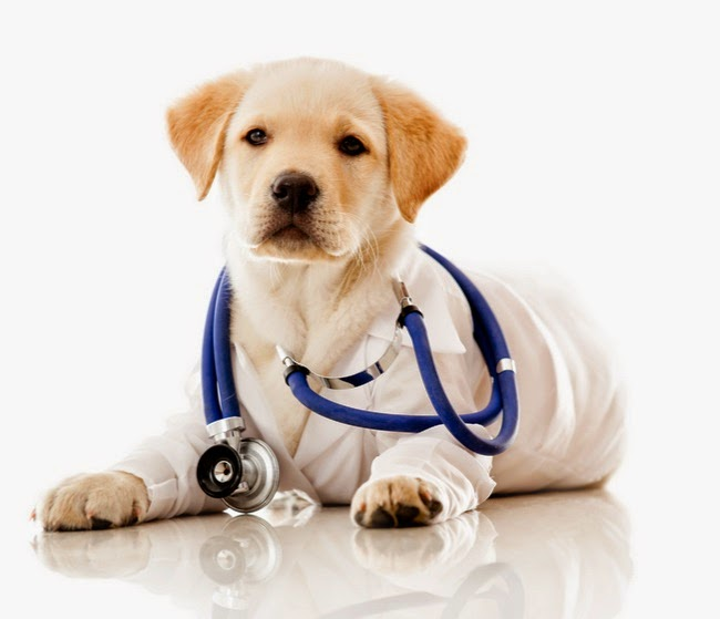 Best Supplements For Dogs With Cancer