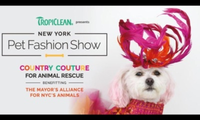 Pet Fashion Show