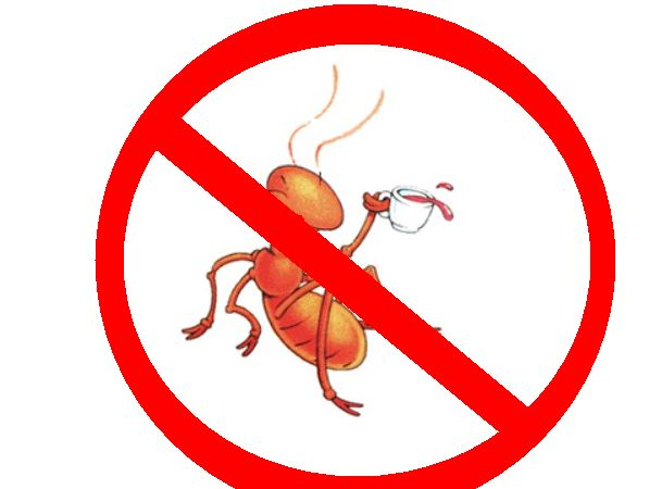 6 Effective Home Remedies To Get Rid Of Ants From Home U0026 Garden