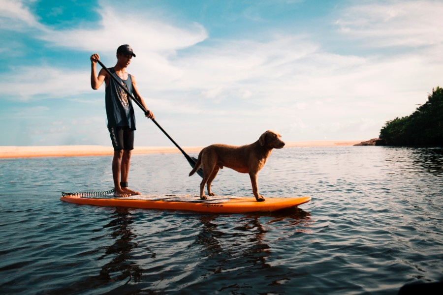 Stand Up Paddle Boards – An Introduction To SUP Board Shapes