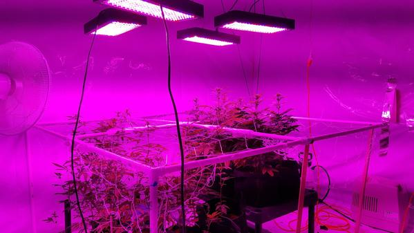 Buy The Best Indoor Led Grow Lights In Your Budget Times
