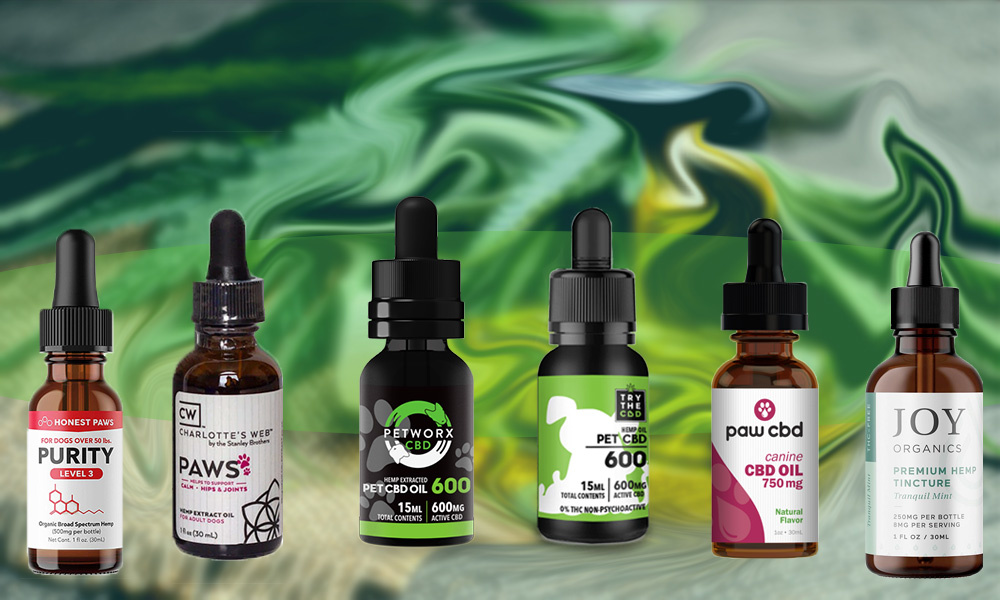 Best CBD Oil for Dogs — Buyer's Guide ...observer.com